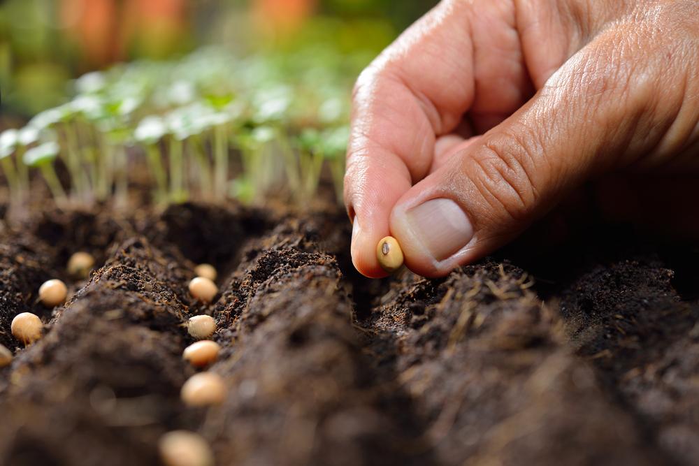 AgroPublic | soil1