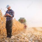 AgroPublic | 85974234 young farmer examine corn seed in corn fields during harvest