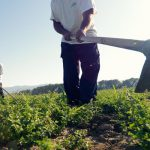 AgroPublic | agro