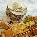 beekeeper 1024x752 1