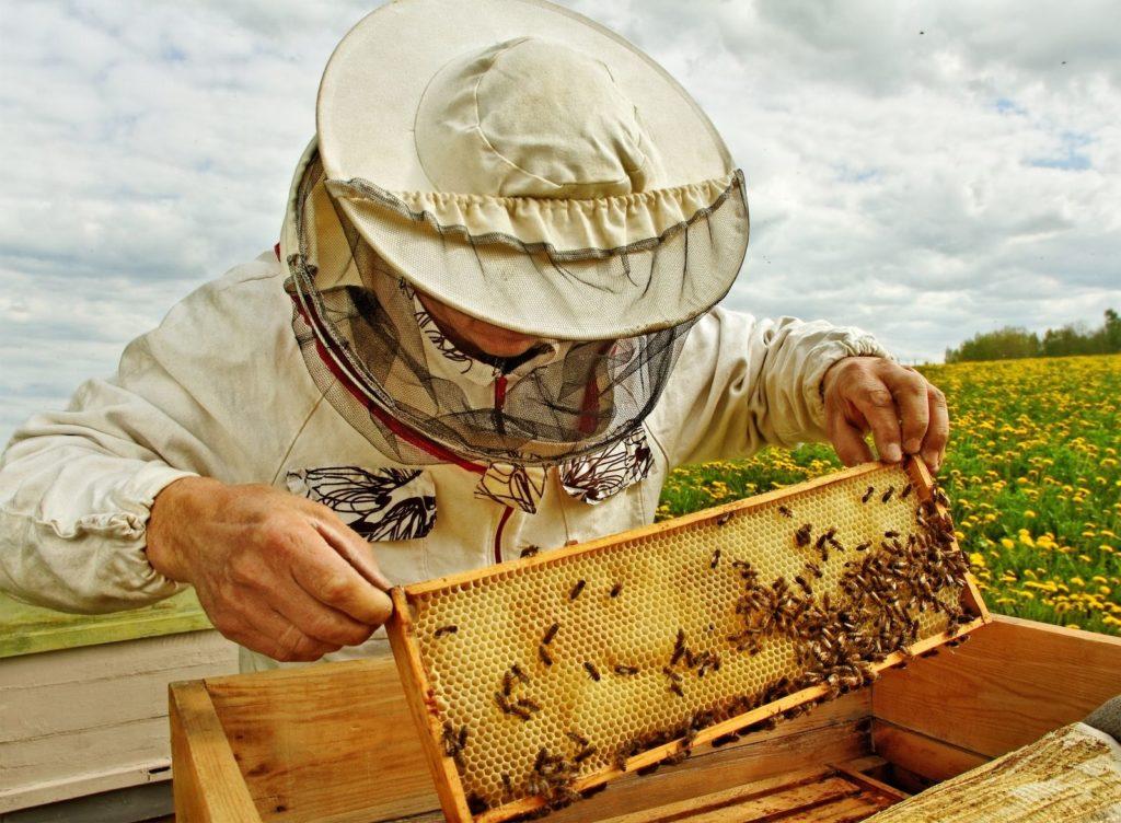 AgroPublic | beekeeper 1024x752 1