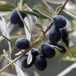 AgroPublic | kalamon