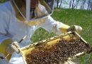 Ταχύρρυθμες εκπαιδεύσεις μελισσοκόμων 2021