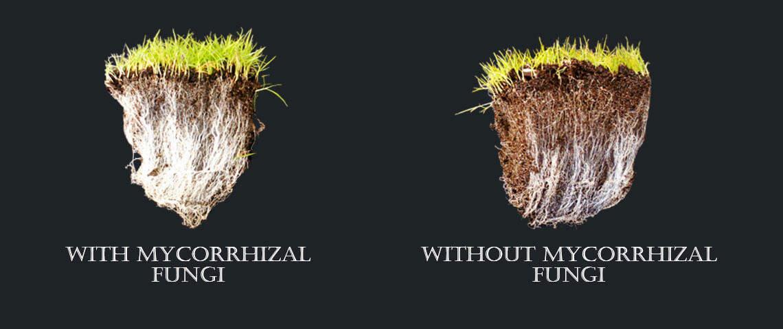 mycorrhizalfungi header