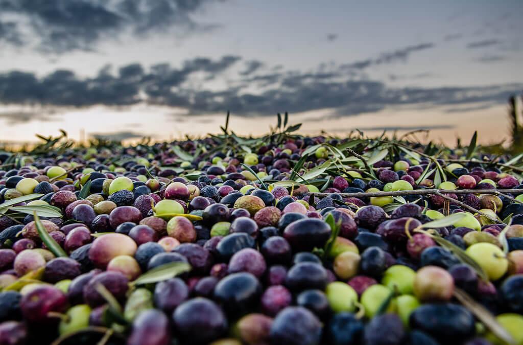 AgroPublic | olive 1024x675 1