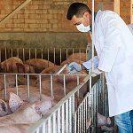 AgroPublic | pigs doc 660