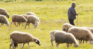 Κτηνοτροφικοί Σύλλογοι Ανατολικής Μακεδονίας & Θράκης: Επανέρχονται με τα 5 βασικά αιτήματά τους προς το ΥΠΑΑΤ