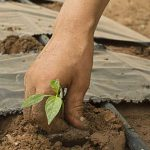 AgroPublic   AGROTHS FYTO PIX