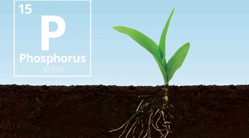 Taurus Inbound Blog Nov2017 Phosphorus 03