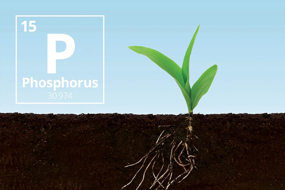 AgroPublic | Taurus Inbound Blog Nov2017 Phosphorus 03