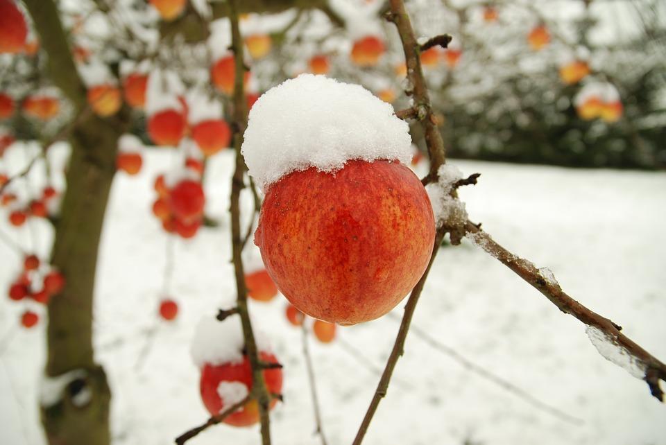 AgroPublic   apple 2547088 960 720