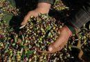 Προβλήματα στους αγρότες με το Μέτρο 21 καταγγέλλουν Αραχωβίτης – Βαρδάκης