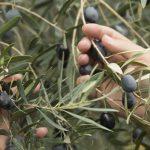 AgroPublic | elia kalamon