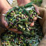 AgroPublic | elia ladi elaioparagogoi