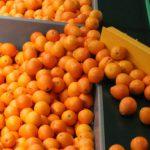 AgroPublic | froyta exag 708 0