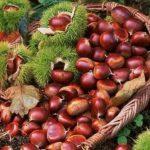 AgroPublic   kastanaa