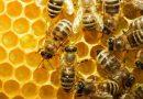 Προστασία των μελισσών και εκτίμηση των περιβαλλοντικών κινδύνων