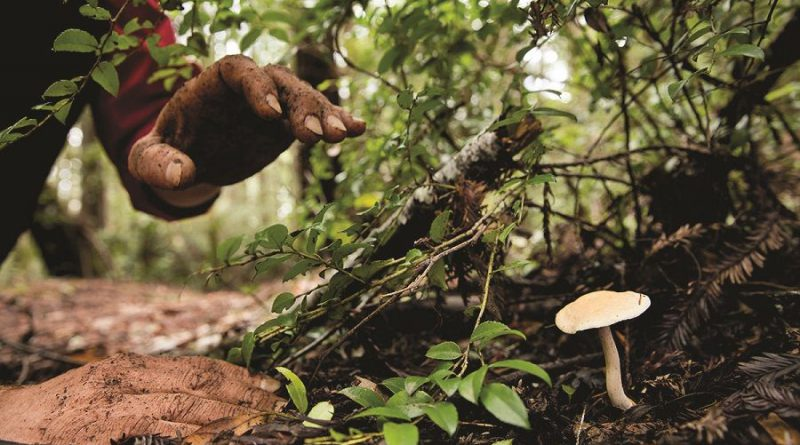 mushroom foraging hedgehog