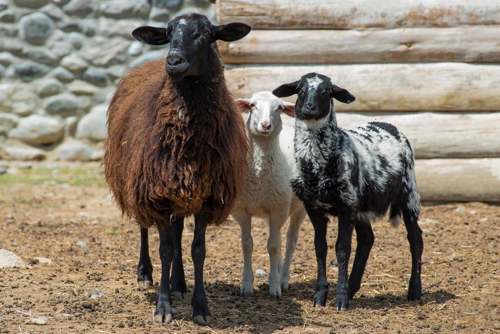 AgroPublic | parko agrion thiramaton provata ispanias konitsa lotos farm
