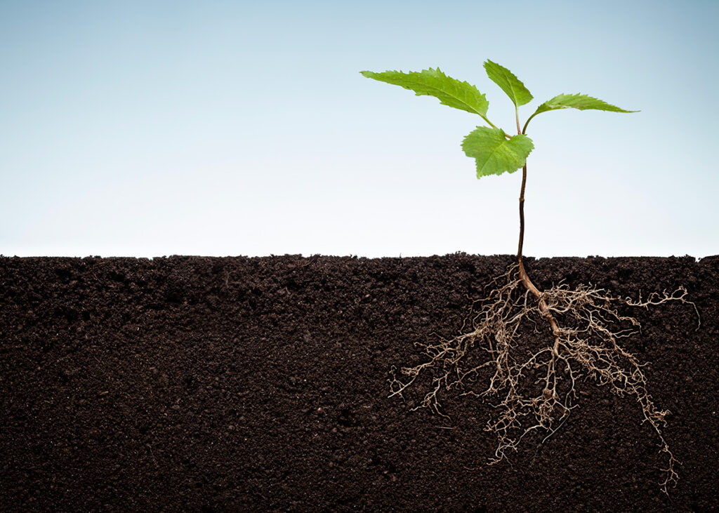 AgroPublic | plant roots 170943374 iStock ThomasVogel