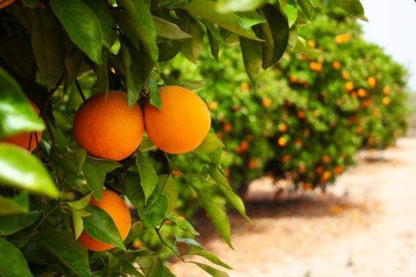 portokalia full