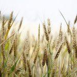AgroPublic | sytari 1