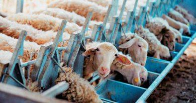 Δυσβάσταχτο το κόστος των ζωοτροφών για τους κτηνοτρόφους