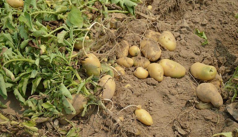 1613721507 0 potato 3738