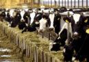 Τον Αύγουστο οι αποφάσεις για τα δικαιώματα άμεσων ενισχύσεων – καμπανάκι για τα ειδικά δικαιώματα αγελαδοτρόφων