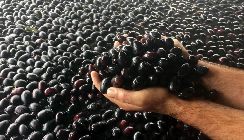 AgroPublic | elies korivos food 1160x665 1