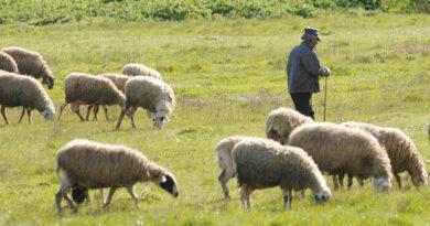 Κτηνοτροφικοί Σύλλογοι: Προτάσεις για τον τρόπο κατανομής των άμεσων ενισχύσεων της ΚΑΠ