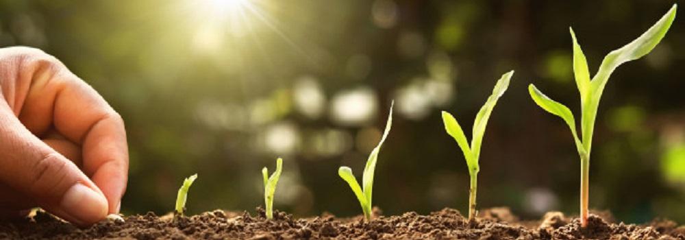 AgroPublic | mano siembra semilla maiz medula huerto sol 34152 1616
