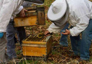 ΑΡΓΟΛΙΔΑ: Σύλληψη 70χρονου – Έκλεψε κυψέλες μελισσών