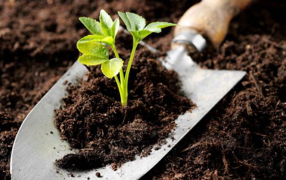 AgroPublic | organiki lipansi
