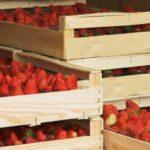 AgroPublic | strawberries 1449775