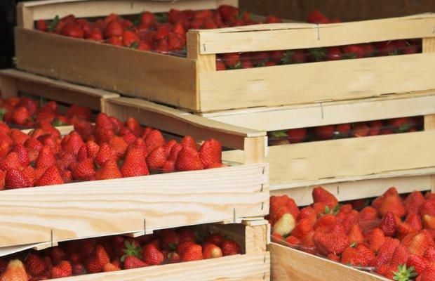 strawberries 1449775