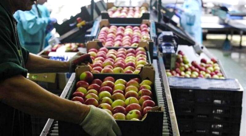 Εξαγωγές Φρούτων