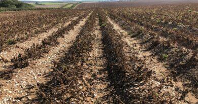 FMC: Στην αγορά το ζιζανιοκτόνο AFFINITY® 6 ME για την καλλιέργεια της Πατάτας
