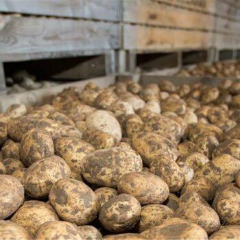 AgroPublic | 1 MAIN spud store 1554 GNP 2479 c Gary Naylor