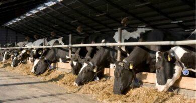 Αργοσβήνει η αγελαδοτροφία στο νομό Κιλκίς – Από 4.000 μονάδες σήμερα έφτασαν τις 50