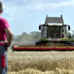 AgroPublic   agrotes daneia 1000