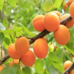 AgroPublic | berikokia