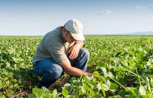 depositphotos 79472762 stock photo farmer in soybean fields