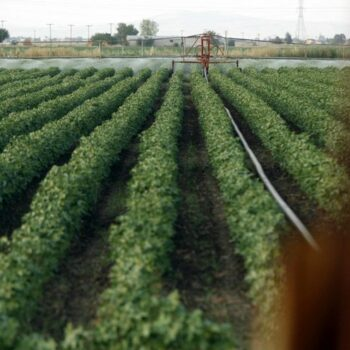 AgroPublic | elga xorafia 31 3 21