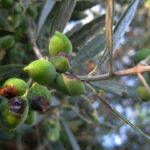 AgroPublic | elies dakos 1