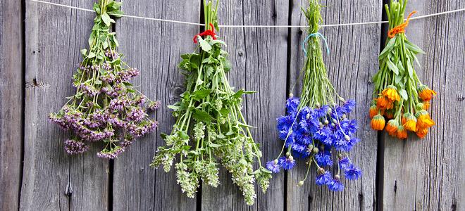 AgroPublic | herbs 660