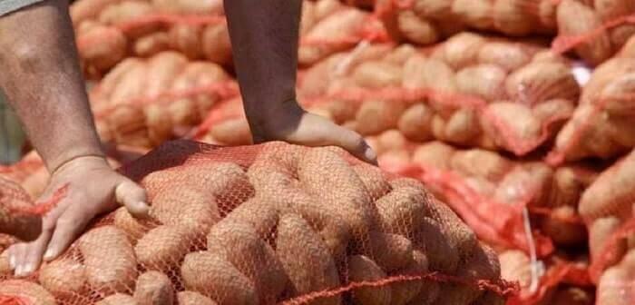 AgroPublic | patatoparagogoi101220 min 1