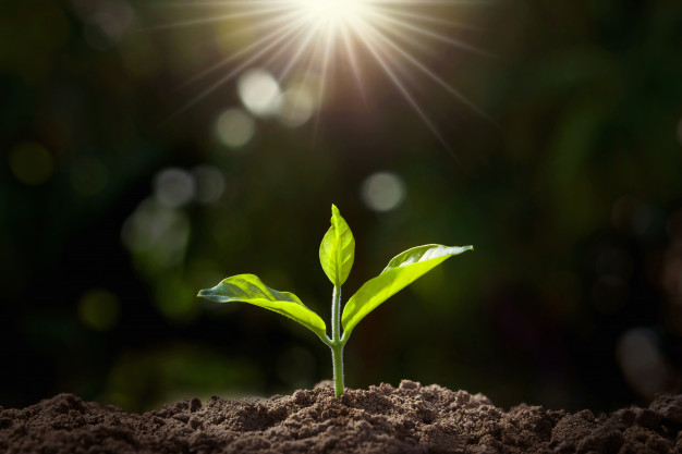 small plant growing garden with sunlight 34152 1259