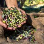 AgroPublic | dakos elies 2 1