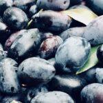AgroPublic | elies kalamon 2